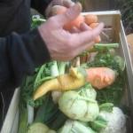 In der EU unbrauchbares Gemüse